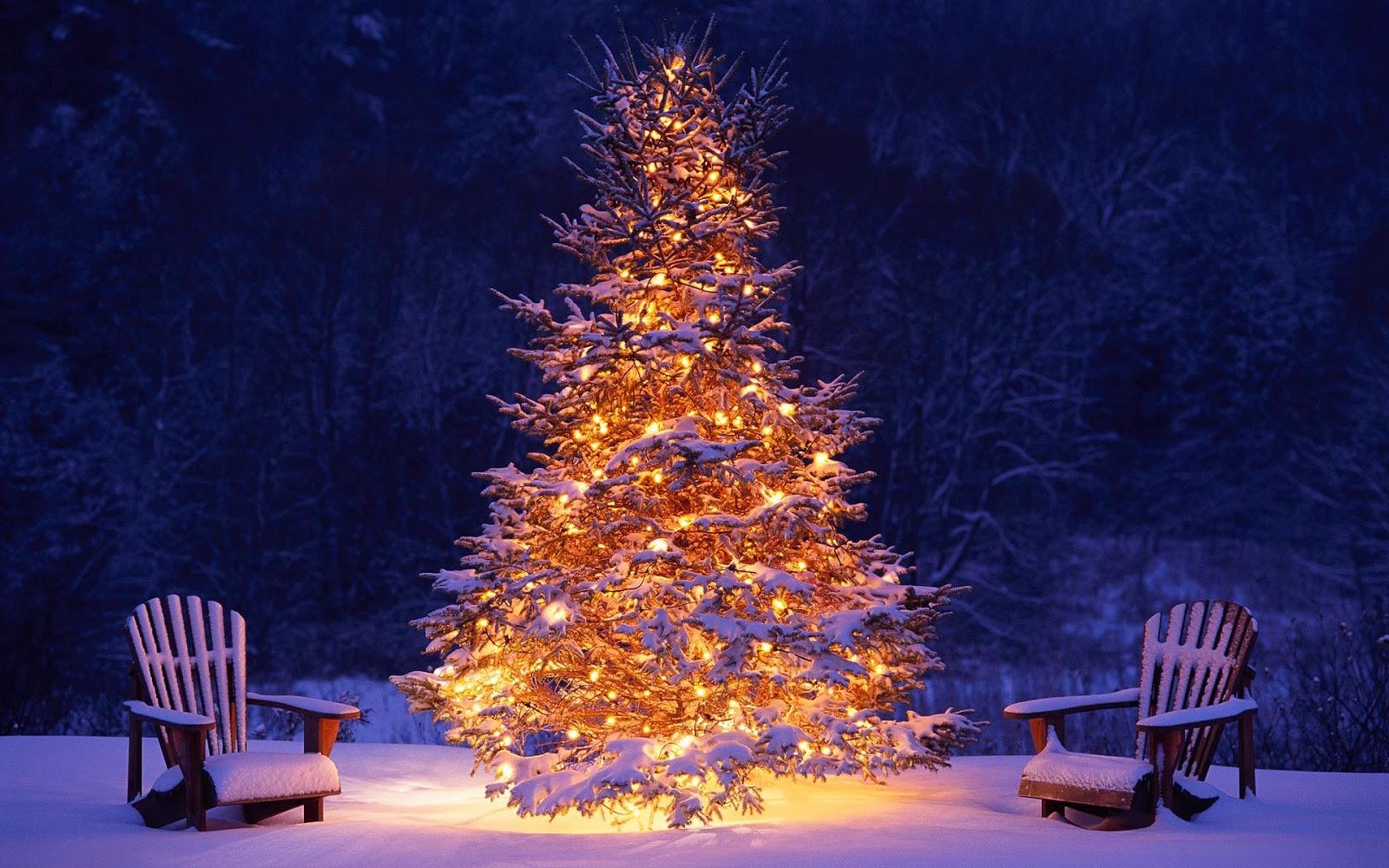 kerstboom buiten